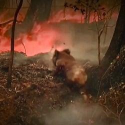 Помочь пострадавшим животным при пожаре