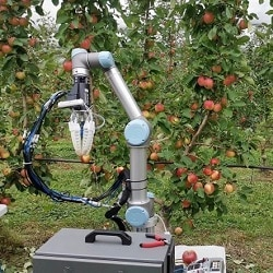 Робот собирает урожай